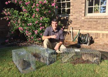 Raccoon Removal Montgomery, AL